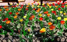 Boulder Downtown Spring