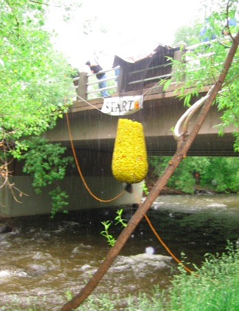 Duck race, Boulder Creek Festival