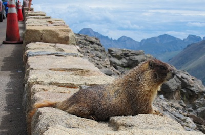 marmot Boulder, CO