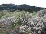 Fort Collins ローリー州立公園