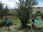 ボルダー リンゴ狩り