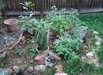 ボルダーの庭