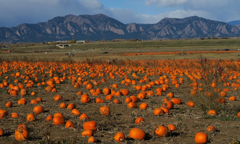 Rock Creek Farm コロラド かぼちゃ刈り