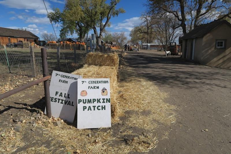 7th Generation Farm コロラド かぼちゃ刈り